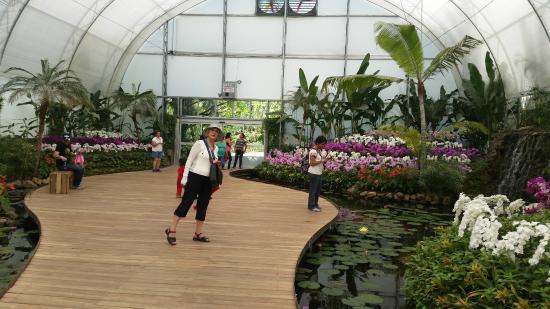 En el orquidario en el que encontr demasiada simetr a en for Jardines de orquideas