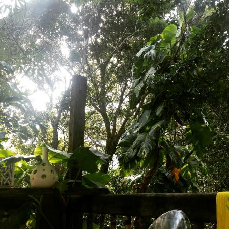 """Ecolodge Shalala: Our """"jungle"""" oasis in the middle of PDC!"""