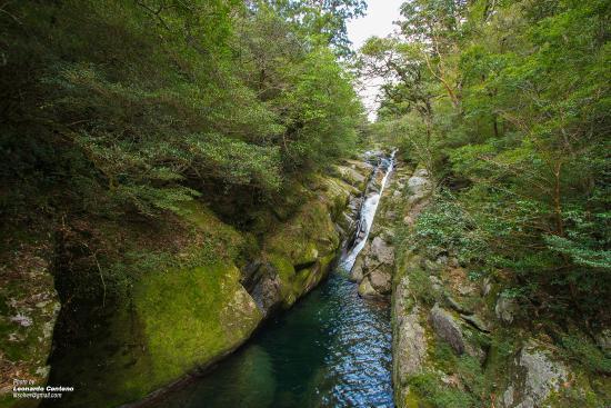 Shiranati - Yakushima - Picture of Shiratani Unsuikyo Valley, Kumage-gun Yaku...