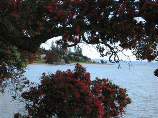 Thorold Country House: Coastline
