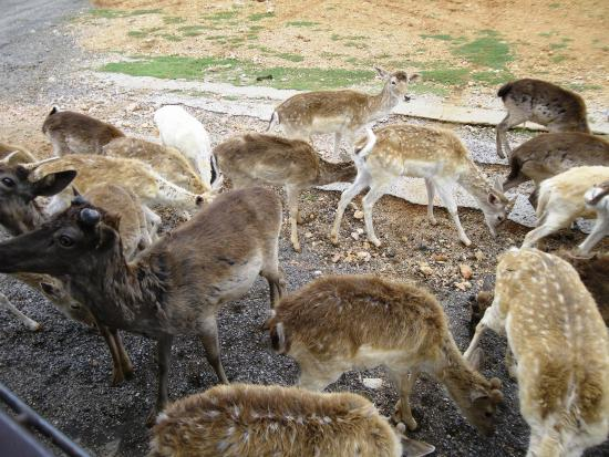 Exotic Resort Zoo : The Gathering