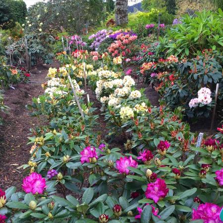 WOW! - Picture of Whitney Gardens and Nursery, Brinnon - TripAdvisor