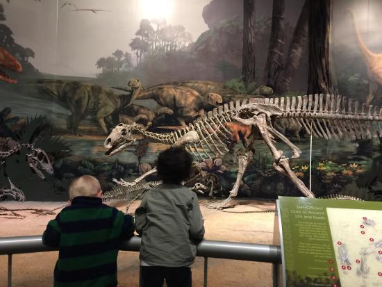 Sam Noble Oklahoma Museum of Natural History: photo1.jpg