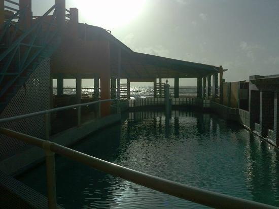 RASH Resort: pool area