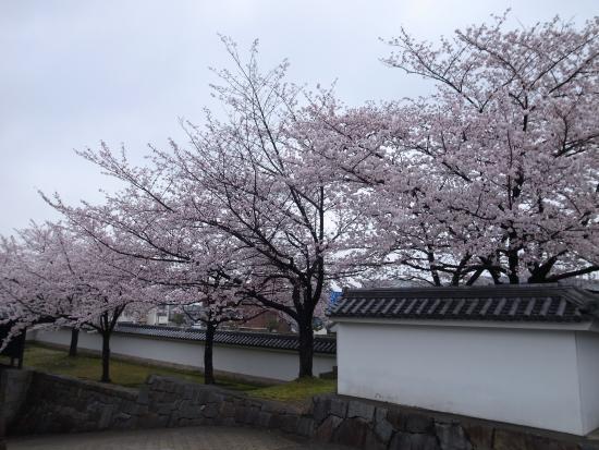 Okazaki Park: 桜と白壁