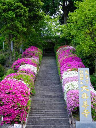 Kiyama-cho, Japan: つつじ満開の大興善寺石段
