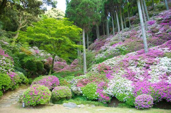 Daikozenji Temple: 一目一万本