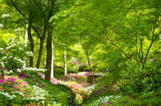 Daikozenji Temple: 契園の新緑とつつじの花々