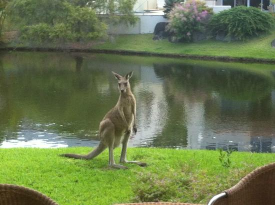 The Lakes Coolum