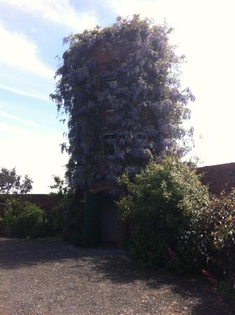 Wonderful wisteria picture of stone house cottage gardens stone house cottage gardens wonderful wisteria workwithnaturefo