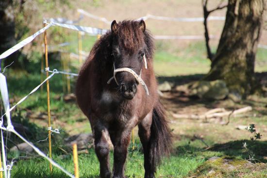Camping Le Moustoir : poney