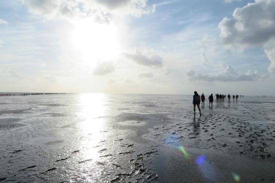 Pieterburen, The Netherlands: het uitzicht wordt steeds weidser