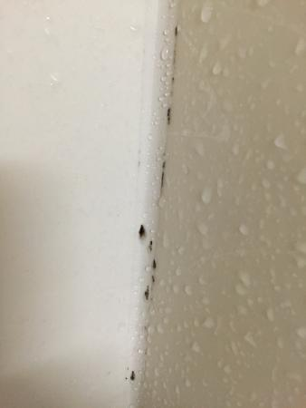 Holiday Inn Univ of Memphis: Pretty sure that's black mold growing in the shower... Just saying
