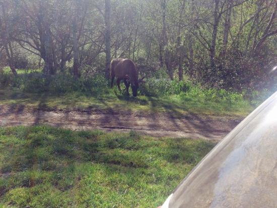 Sinkyone Wilderness State Park : Wildlife