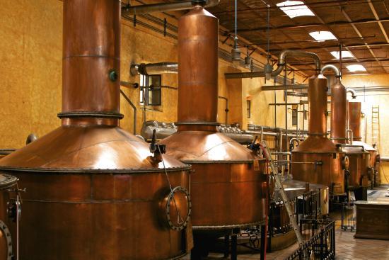 La Rojena: En la destilación es el único lugar donde podrás probar un tequila con 55° de alcohol.