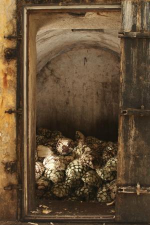 El olor al agave cocido es un dulce aroma que te acompañará durante tu visita a La Rojeña.
