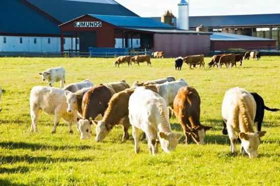 Ejmunds Farm