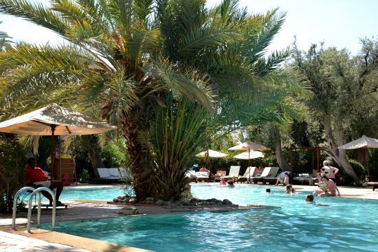 Piscine picture of club med marrakech la palmeraie for Club piscine ca