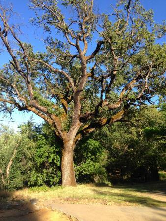Sacred Springs Retreat and B&B: Beautiful tree on Sacred Springs property.