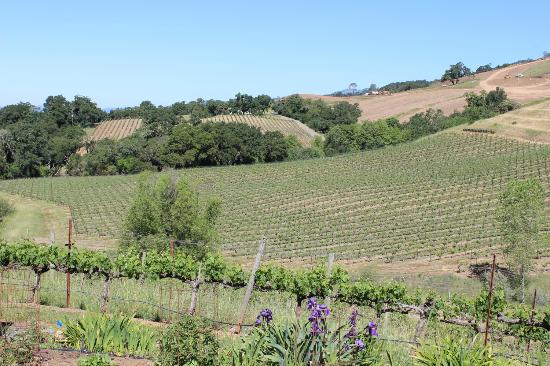 Hanna Winery: The view out back