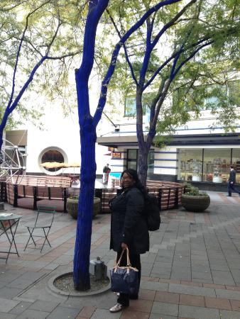 Westlake Center: this is the blue trees right out side the mall