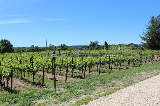 DeLoach Vineyards: The grounds