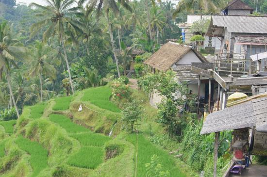Tegalalang rice terraces a unesco world heritage site for Tegalalang rice terrace ubud