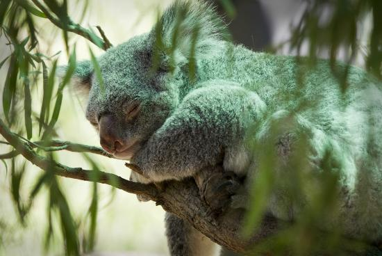 Perth Zoo : It can be tiring seeing all there is to see at the zoo.