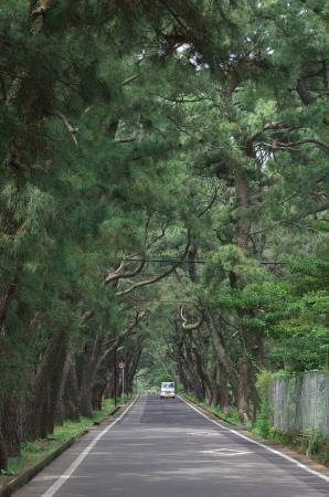 Himeno Matsubara