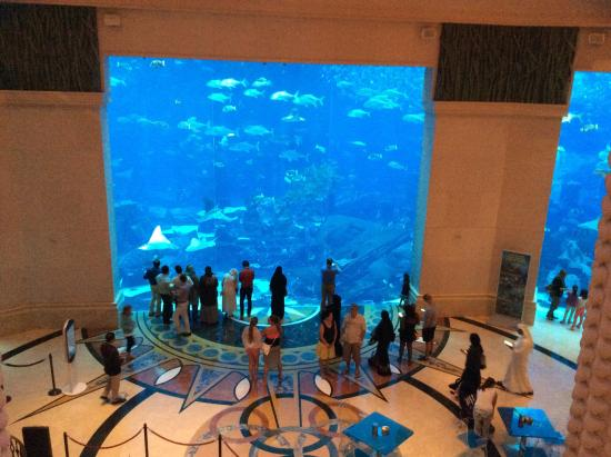 Atlantis The Palm A Very Large Fish Tank