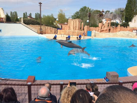 Plailly, Frankrike: Le spectacle des dauphins