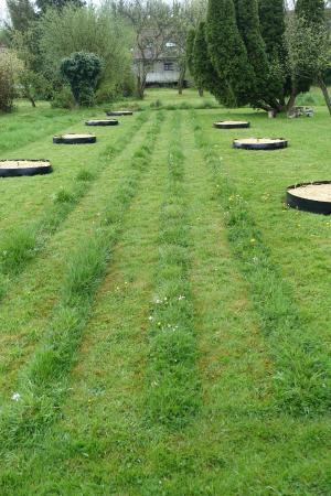 Le jardin foto di auberge de la grenouillere montreuil for Auberge le jardin de la source