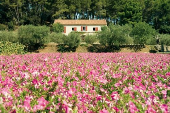 Saint-Remy-de-Provence, Frankrike: Notre entrée