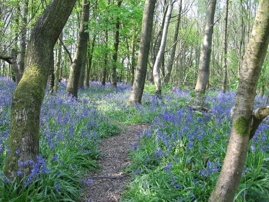 Reinden Wood