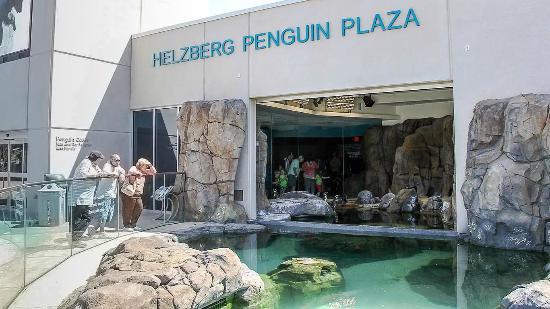 Kansas City Zoo: Penguin Plaza