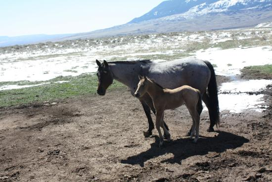 Schively Ranch: New Foal
