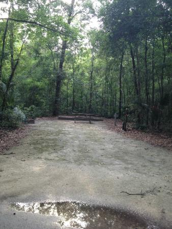 Paynes Prairie State Preserve: One of the RV sites
