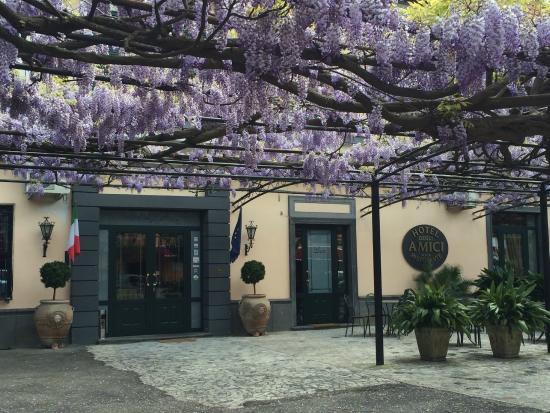 Hotel Degli Amici : Fragrant wisteria arbor in front of the hotel