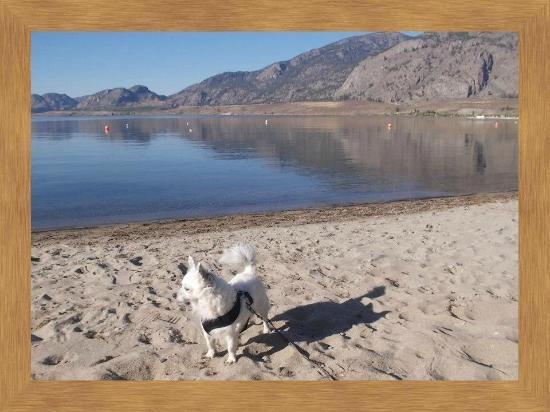 Bella Villa  Motel & Resort: Pet friendly resort my  Lil Chihuahua ruled the beach!