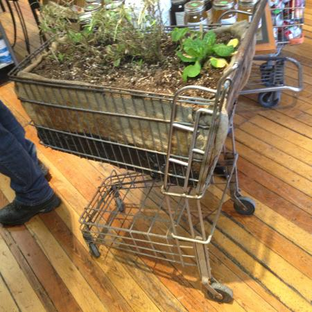 Historic Greenwood: Clever Planting Idea in the Local Store