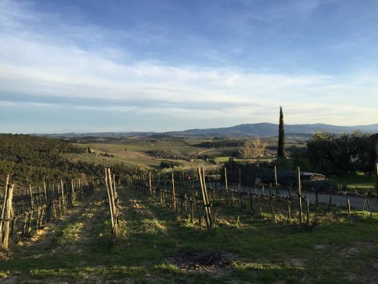 Sant'Agnese Farm : The View