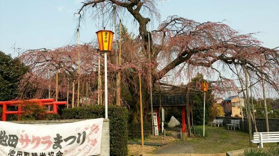 Unjo No Sakura