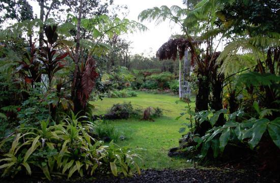 Volcano Fern Forest Retreat