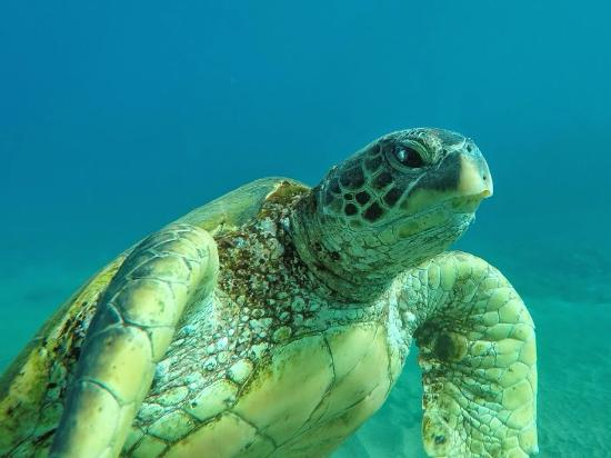 Hawaiian Paddle Sports: Peter was an underwater photographer so his pics He took for us were unreal ! thank you