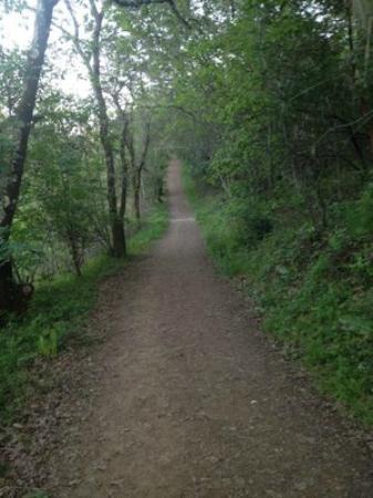 Healdsburg Ridge Open Space Preserve : Canopy of oaks.