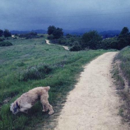 Healdsburg Ridge Open Space Preserve : Toby checks his pee mail.