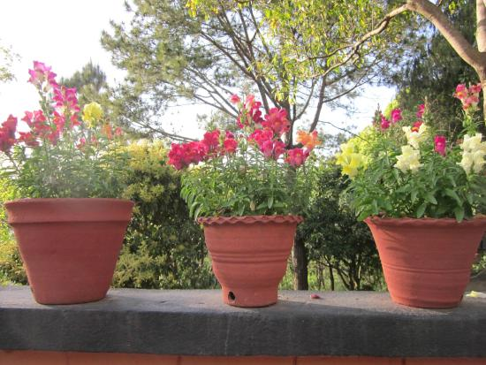 Dhulikhel Mountain Resort: Flowers
