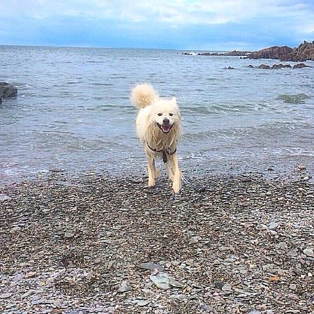 Mortehoe, UK: Casper enjoying Grunta beach!