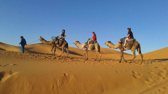 Desert Tripper - Day Tours