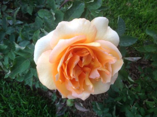 Le Palais Rhoul & Spa: Les superbes roses